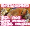 特色土窑鸡制作方法 叫花鸡学习班 手撕鸡有卖吗