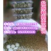 武汉盐焗鹌鹑蛋做法哪里学 盐焗鹌鹑蛋技术培训